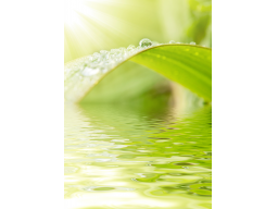 Webinar: Heiler werden - Heiler sein