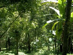 Webinar: Meditation Dschungel