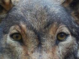 Webinar: Schamanische Krafttierreise zur Selbstfindung