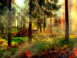 Webinar: Das Orakel Deiner Märchenwelt