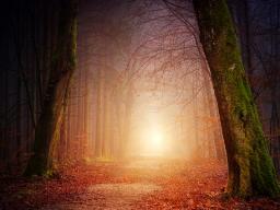 Webinar: Einführungswebinar Umarme Deinen Schatten und spüre Dein Seelenlicht