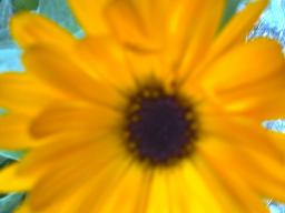 Webinar: Spagyrik Pflanzen von Nr.56 - 70