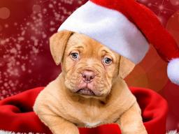 Webinar: 2018 Jahr=Chinesisches Jahr des Hundes
