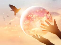 Webinar: Körper-Geist-Seele in Harmonie