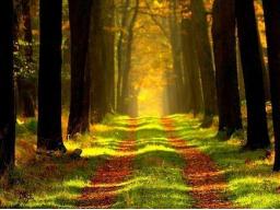 Webinar: Meditation mit deinem Geistführer