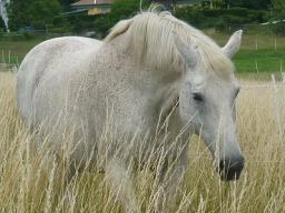 Webinar: Tierkommunikation und Tier-Energetik für alle Tierarten