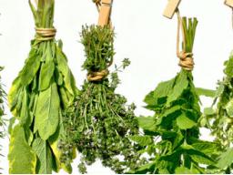 Webinar: Gesund bleiben - Immunsystem verstehen und aufbauen
