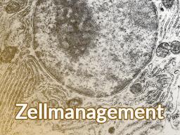 """Webinar: Zellmanagement - körperliche """"Problemzonen"""" erkennen, stärken und heil werden lassen"""