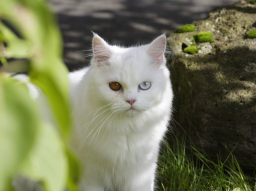 Webinar: Emotionale Regeneration für dein Tier - Aufbau