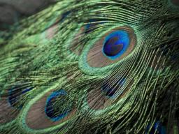 Webinar: Aufstiegsmeditation - Wie Phönix aus der Asche steigen