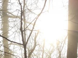 Webinar: Geführte Meditation: Nach Hause kommen