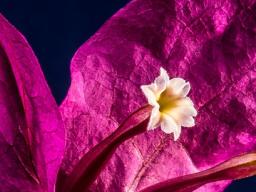 Webinar: Ausbildung zur Blütentherapeutin Infowebinar