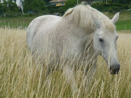 Webinar: Kostenloses Webinar Tierkommunikation und Tierenergetik