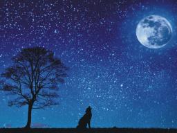 Webinar: Mondzeit - Das eigene Lied singen