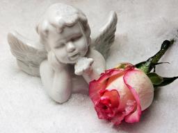 Webinar: Engel-Orakel für DICH (Einzelsitzung)