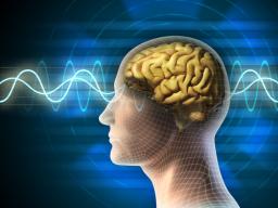 Webinar: Ängste transformieren im R-Areal unseres Gehirnes