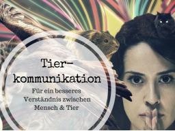 Webinar: Einblick in die Tierkommunikation - Kostenloses Webinar