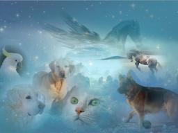 Webinar: Ferneinweihung Besprechen für Tiere
