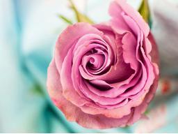 Webinar: GOTTES Kraftstunde am Sonntag voll Liebe, Inspiration und Transformation