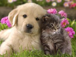 Webinar: Einzelberatung - Tiere finden - Selbstheilung aktivieren