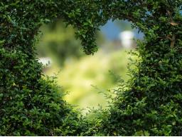 Webinar: Aktion: Liebevolle Einzel Beratung