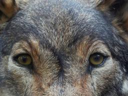 Webinar: Schamanische Krafttierreise zur Selbstfindung/ weiße Büffelkalbfrau