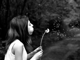 Webinar: Wunscherfüllung durch den Lebensplan