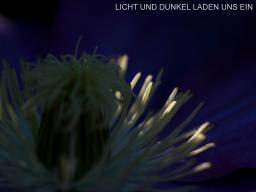 Webinar: Licht und Dunkel laden uns ein