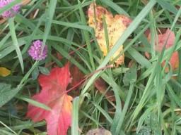 Webinar: Was bringt der Herbst neues mit sich? Mit Video