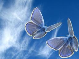 Webinar: Heilung 3: Spiegel deines Bewusstseins. Versteckte Glaubenssätze.