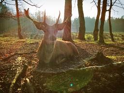 Webinar: Hirsch und Merlin - Heilung von Körper, Geist und Seele durch Raum und Zeit