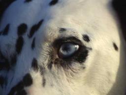 Webinar: Meditation Werde ein Tier