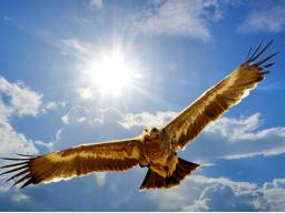 Webinar: Deine Befreiung! Liebeseziehungen/Finanzen/Gesundheit/Transformation... Individuelle Spirituelle Beratung und Blockadenlösung