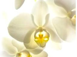 Webinar: Spirituelle Beratung - Coaching