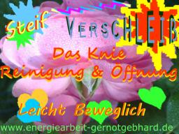 Webinar: OrganReinigung-Das Knie