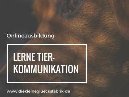 Webinar: Tierkommunikationsexperte (Basis- und Aufbauausbildung)