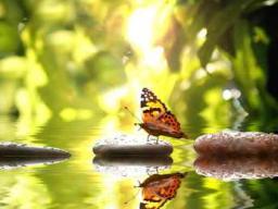 Webinar: Live-Meditation - Segen der stillen Heilkraft