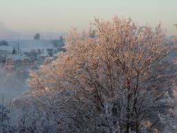 Webinar: Schneekristalle, Hl. Quellen und unser Schöpfungsfeld