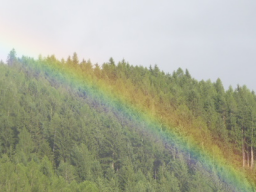 Webinar: Frequenzen für unsere Gesundheit: Ein Intensivwebinar mit Einzelarbeit mit den Merkurianer und den Bäumen
