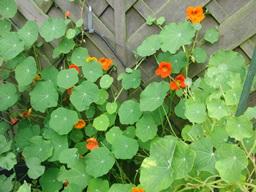 Webinar: SABINE RICHTER zu Pflanzen - Informationen auf der stofflichen und feinstofflichen Ebene - Teil 2