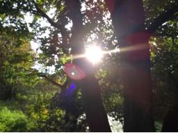 Webinar: Lichtnahrung - Hirngespinst, Gefahr oder geniale Lösung? Workshop/Vortrag mit Sabine Richter