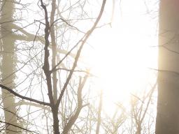 Webinar: Geführte Meditation - Stehe in Deiner inneren Stärke