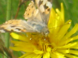 Webinar: Bachblütenberatung