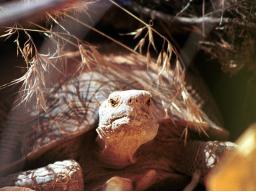 Webinar: Schamanische Krafttierreise zur Selbstfindung/die Schildkröte