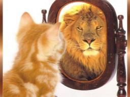 Webinar: Einzelcoaching:Mehr Mut zum Ich: Sei du selbst und lebe glücklicher 1Std.