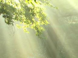 Webinar: Lichtkörperprozess: Die große Mahatma Invokation