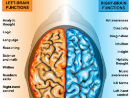 Webinar: Aktivieren und harmonisieren der Gehirnhälften