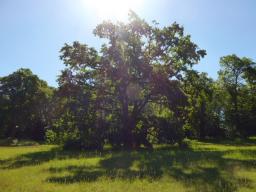 Webinar: Mit den Bäumen zu den Wurzeln