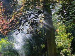 Webinar: Die Verbindung mit Deiner göttlichen Präsenz - Die 9 Schlüssel der göttlichen Geheimnisse in Dir