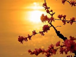 Webinar: wiecej harmonii i milosci w relacjach miedzyludzkich